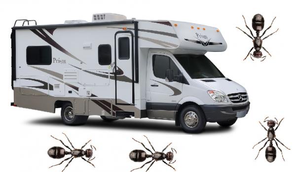 hmyz v karavane1