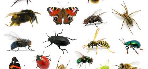 hmyz v karavane2